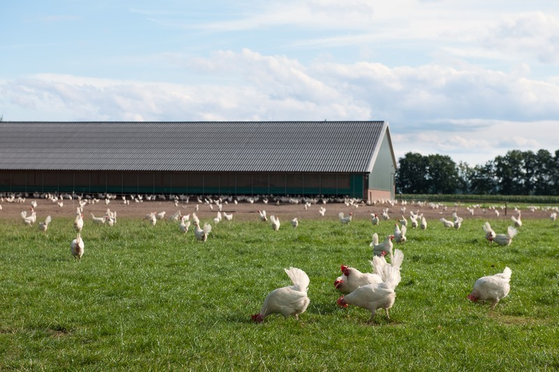 prefabricadas-agricolas (24)