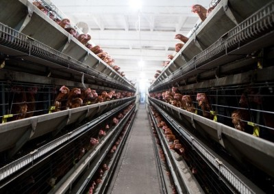 chicken farm