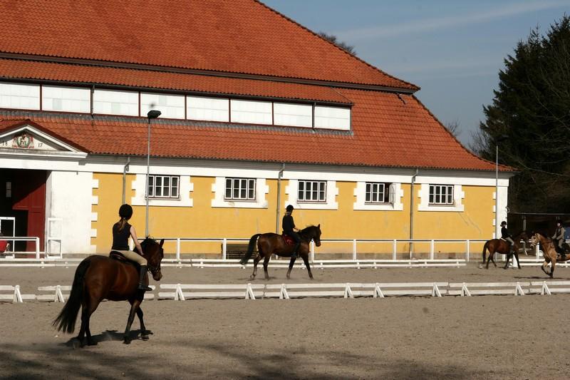 danish horse farm